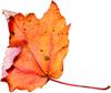 leaf1s.jpg