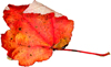 leaf2s.jpg